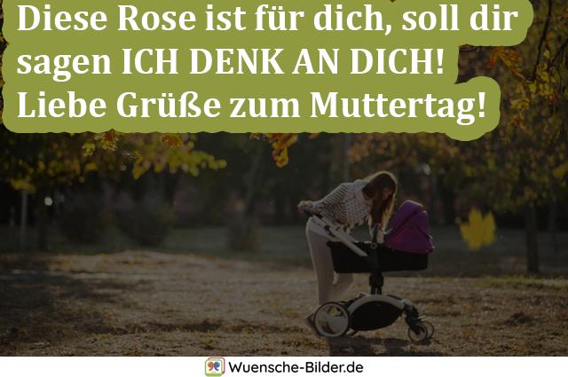Diese Rose ist für dich