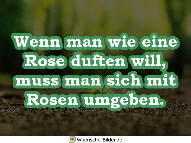 Wenn man wie eine Rose